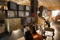 palace pour chiens 4