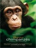 Chimpanzés : Affiche