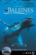 Baleines : Affiche