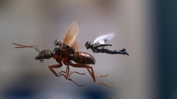 Paul Rudd (Scott Lang / Ant-Man), Evangeline Lilly (Hope Van Dyne / La Guêpe)