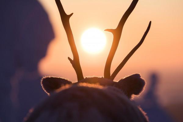 Aïlo : une odyssée en Laponie, extrait