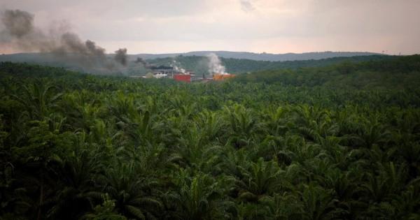 Palmiers et usine, Indonésie
