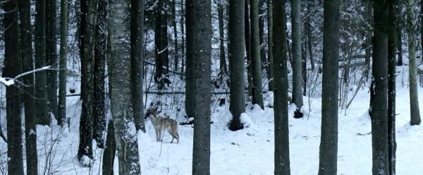 Dans les bois, extrait