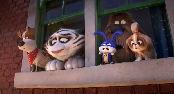 Max, Hu, Pompon, Duke, Daisy