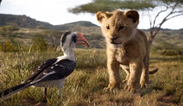 Zazu, Simba jeune