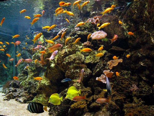 Aquarium tropical de la porte dor e paris 12e l 39 officiel des spectacles - Aquarium tropical de la porte doree ...