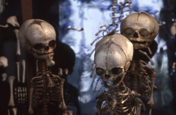 La Galerie d'Anatomie comparée