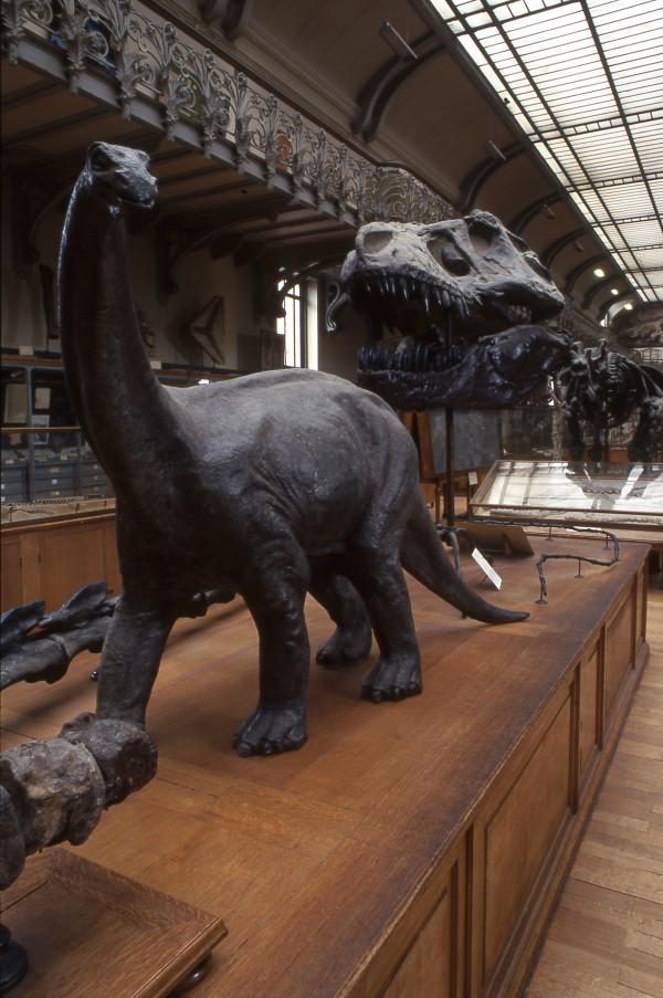 La Galerie de Paléontologie