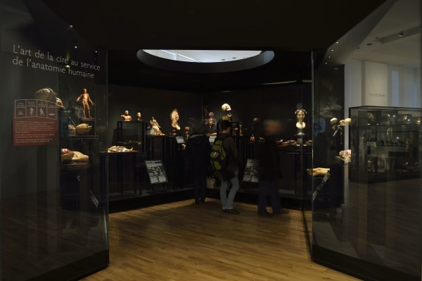 La Galerie de l'Homme - L'art de la cire au service de l'anatomie humaine - Partie 1 Qui sommes-nous