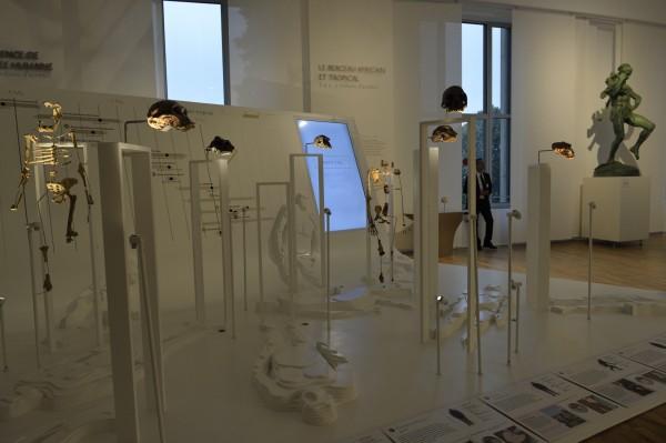 La Galerie de l'Homme - Partie 2 - Le berceau africain et tropical