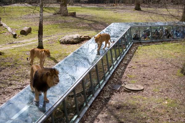 Parc zoologique de thoiry thoiry l 39 officiel des spectacles for Zoo en yvelines