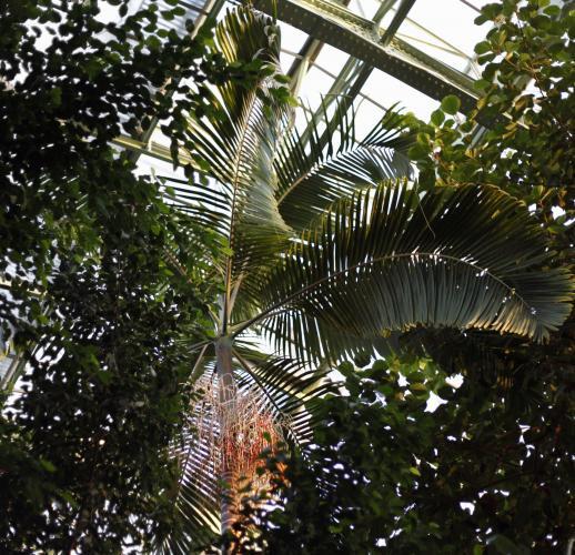 Serres du jardin des plantes paris 5e l 39 officiel des - Serres jardin des plantes ...