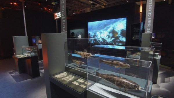 Océan - Vue de l'exposition