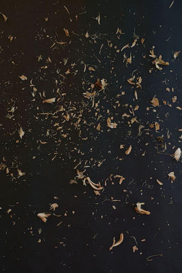 Manuela Marques, Graines 7, éd. 1/3 + 2EA impression numérique sur papier baryté, 160 x 106 cm, 2018