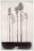 Gunnar NORRMAN - Tallhed, 1964 -  pointe sèche sur papier -  21 x 14 cm [30 x 23 cm]